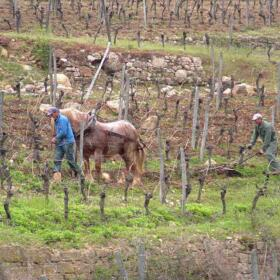 Chevaux Domaines Schlumberger Alsace
