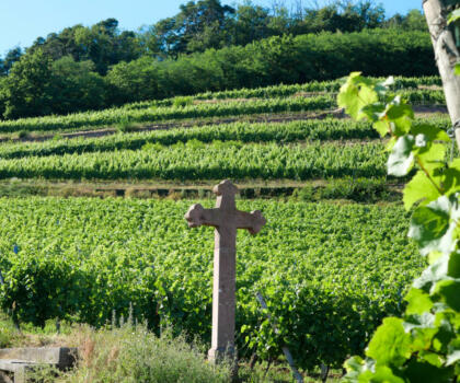 Vignoble Domaines Schlumberger Alsace