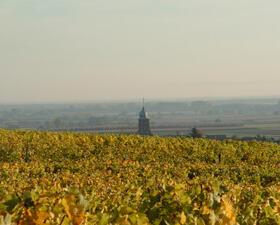 Vigne paysage Domaines Schlumberger Alsace