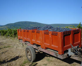Casiers vendanges Domaines Schlumberger