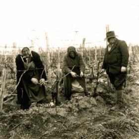 Histoire vigne Domaines Schlumberger Alsace