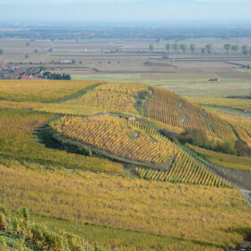 Vigne Grand Cru Saering Domaines Schlumberger Alsace