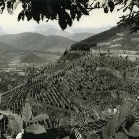 Vigne histoire Domaines Schlumberger Alsace
