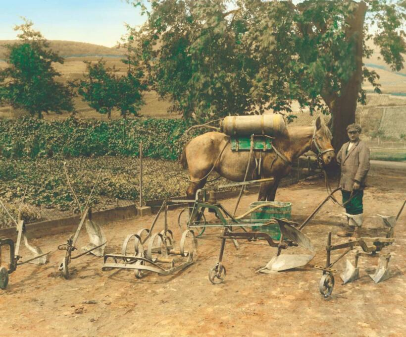 Histoire Culture vigne Domaines Schlumberger Alsace