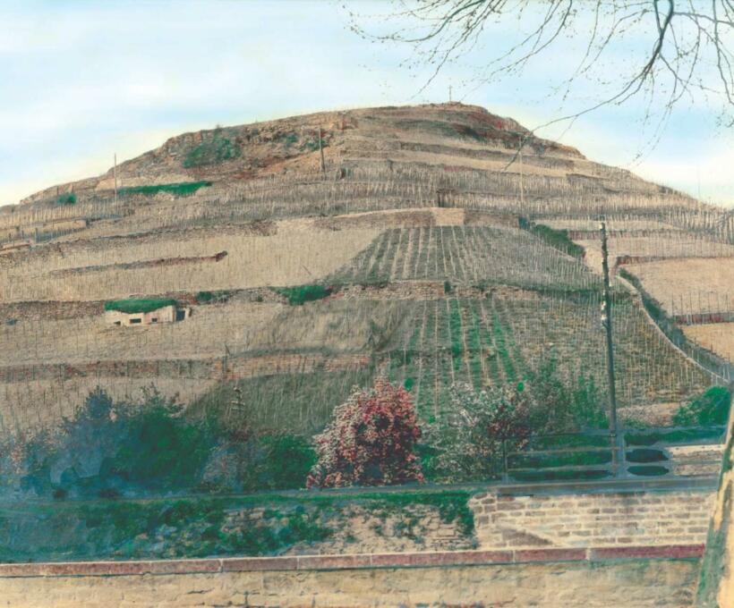 Histoire La légende du Kitterlé Domaines Schlumberger vin Alsace