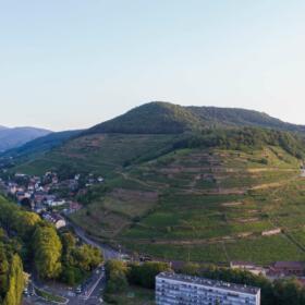 Vigne Visite Aventure Domaines Schlumberger Alsace